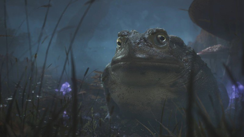 Fable 2020 Toad