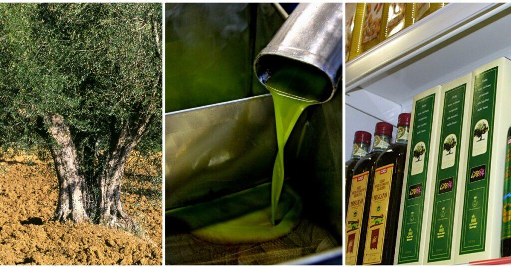 Olio d'oliva, ristoranti chiusi e esportazioni rallentate per il lockdown: crack da 2 miliardi nonostante la produzione raddoppiata
