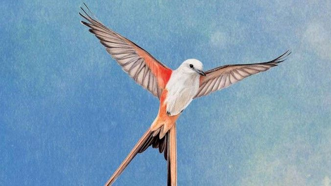 Birdboard game Wingspan on Steam