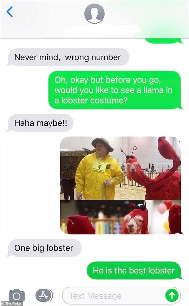 One was given a strange photo of a woman walking in a pet llama dressed as a lobster.