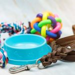 The dog puts the toys in the water bowl: the real reasons