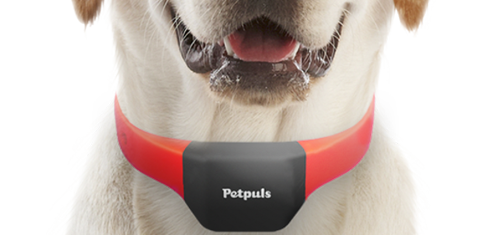 Cats and dogs translator: the first smart gadgets for pets arrive