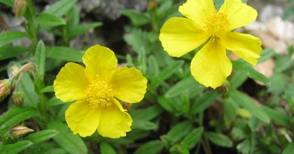 Wild Plant Packs for Garden Diversity    Porta Westfalica