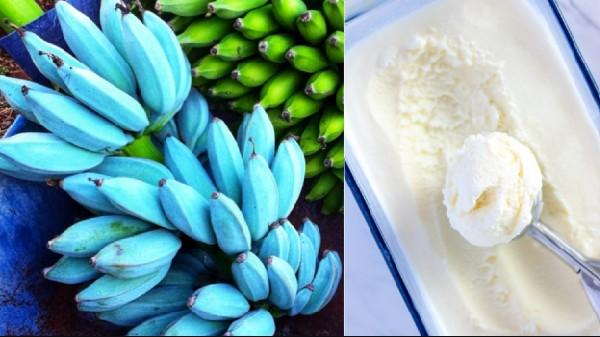 Bananas in blue taste like 'vanilla ice cream'!  New information that mixes the Internet.