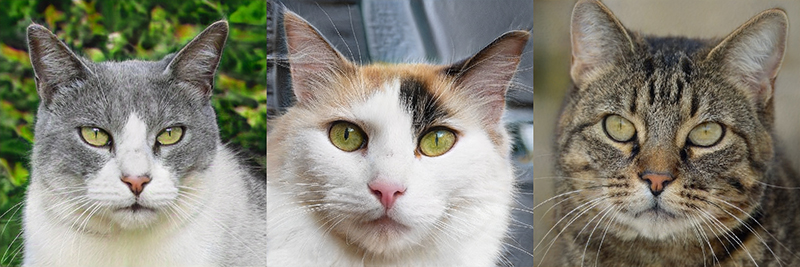 Non-existent cats are generated by the neural network