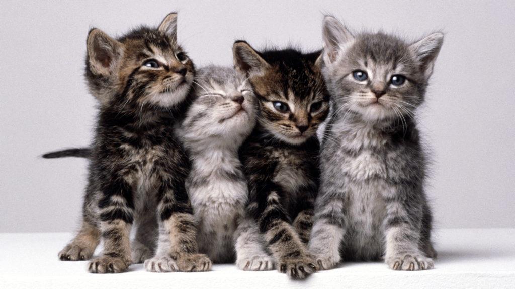 Nem létező macskákról készít képeket a mesterséges intelligencia