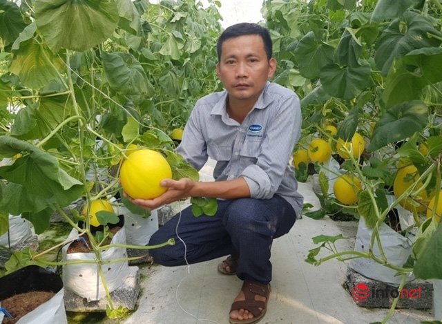 The teacher started a melon growing business, earning more than one hundred million dong / year - Photo 3.