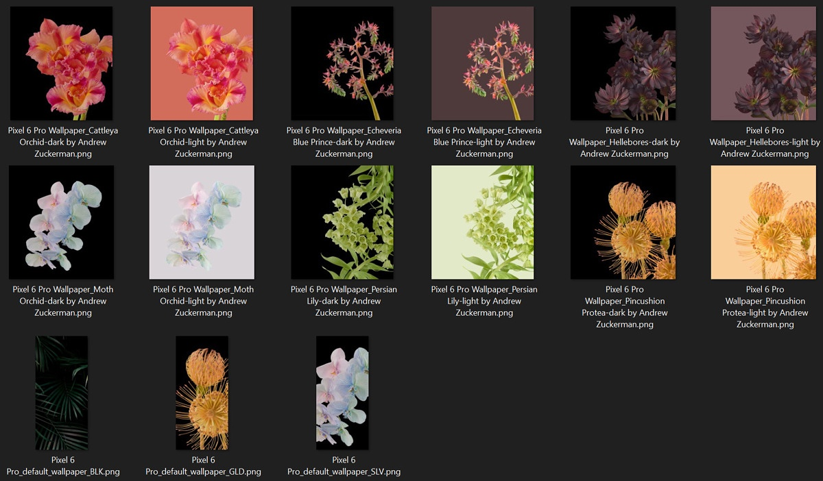 Pixel 6 pro plants wallpapers