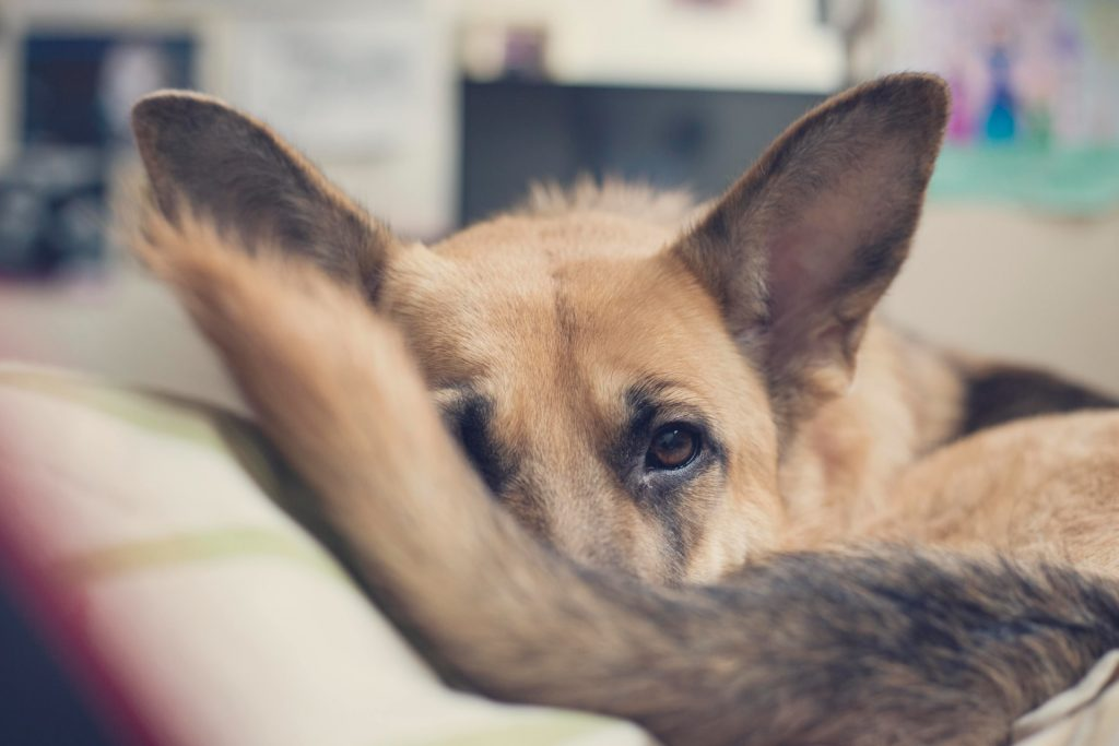 The perfect games and hobbies for an autumn at home with our dogs